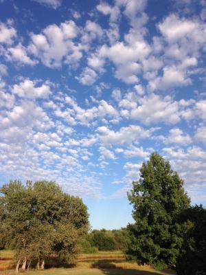 外面, 蓝蓝的天空, 洁白的云朵, 树木, 三角, 甜口香糖, 漂亮