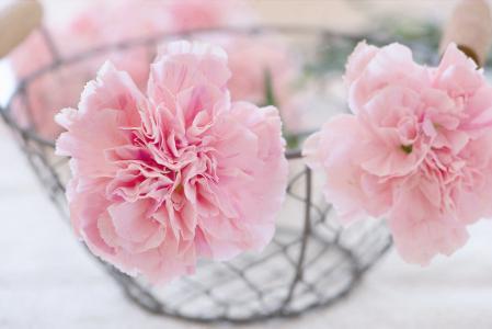 丁香, 花, 开花, 绽放, 粉色, 花瓣, 购物篮