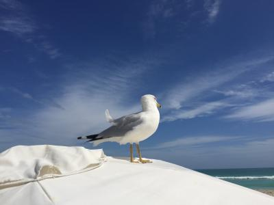 海鸥, 南滩, 迈阿密, 太阳, 雨伞, 鸟, 海