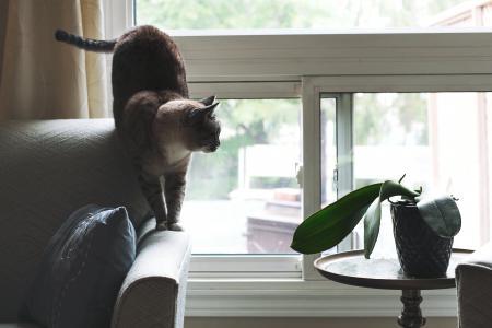 在窗口附近的沙发的猫