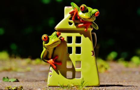 青蛙, 首页, 有趣, 可爱, 甜, 装饰, 图