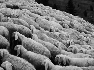 羊, 群羊, 牧场, 羊群, 动物, 草甸, schäfchen