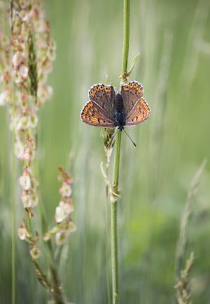蝴蝶, 自然, 草, 翅膀, 着色, 夏季, 植物