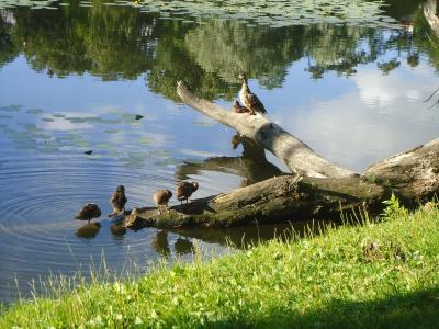 视图, 公园, 水, 景观, 树, 池塘, 自然