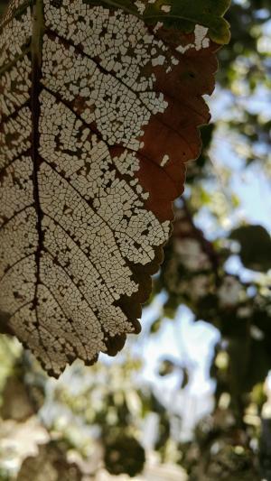 叶, 树, 白色, 棕色, 伊朗