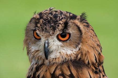 动物, 动物摄影, 喙, 鸟, 模糊, 特写, 眼睛
