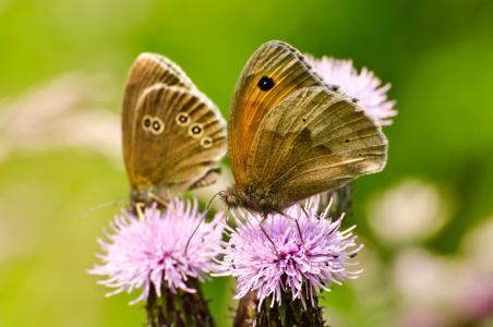 蝴蝶, 蝴蝶, 昆虫, 花, 赛季, 春天, 夏季