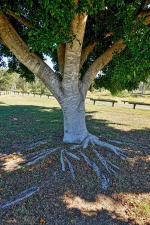 树干, 树, 根, 树根树, 树的根, 树干, 木材