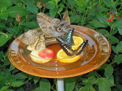 蝴蝶馆, 迈瑙岛岛, 康斯坦茨湖, 蝴蝶, 植物学, 动物, 食品