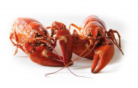 小龙虾, 瑞典, 龙虾党, 红色, 溃疡, 海鲜