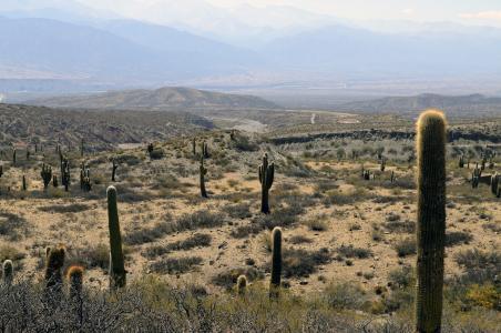 沙漠, 仙人掌, 景观, 亚利桑那州, 干旱, 山脉, 干