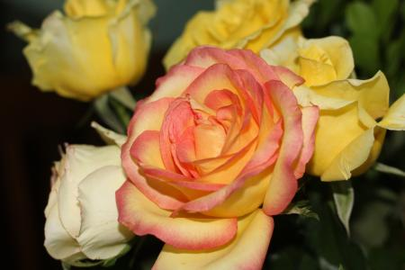 黄玫瑰, 玫瑰, 花, 花, 黄色的花, 自然, 玫瑰-花