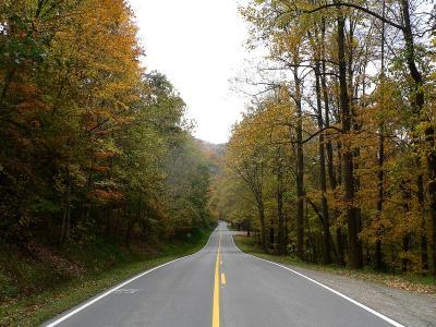 乡间小路, 秋天的落叶, 农村, 景观, 风景名胜, 农村, 多彩