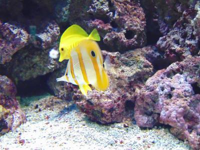 鱼, 动物, 水, 水族馆, 海洋, 自然, 黄色