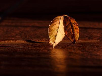 叶, 秋天, 黎明, 黄金时段, 光明和黑暗, 摘要, 光