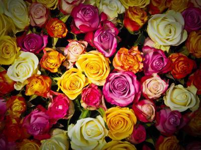 玫瑰, 束玫瑰花, 花束, 花, 白色, 粉色, 橙色玫瑰
