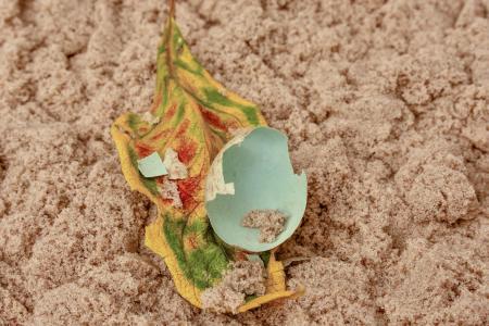 鸡蛋, 自然, 蛋壳, 叶, 破碎, 发现, 撒上
