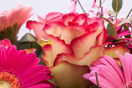 玫瑰, 非洲菊, 复合材料, 扫帚, 属, 花, 春天