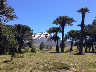 全国公园, 洛杉矶 araucarias, 智利阿根廷