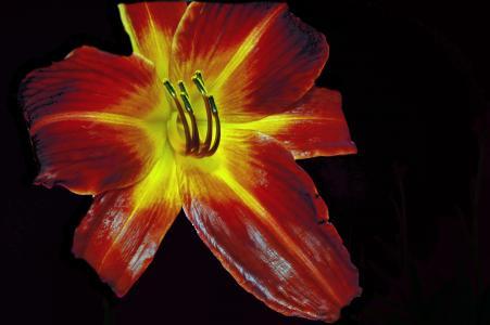 百合, 红色, 花, 自然, 植物, 花香, 开花
