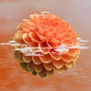 大丽花, 花, 开花, 绽放, 自然, 植物, 植物区系