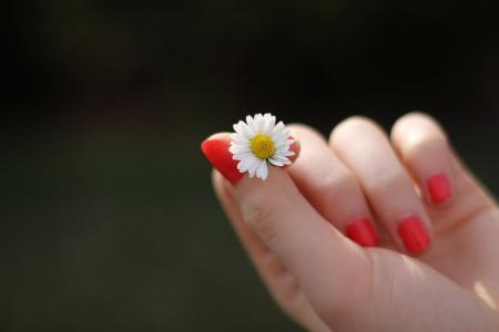 手, 黛西, 花, 手指, 指甲, 漆, 甜