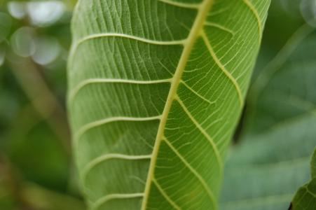 叶, 绿色, 自然, 绿色的叶子, 植物, 露水, 植物区系