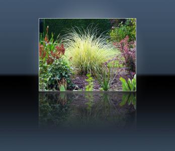 花园, 植物区系, 花香, 植物, 自然, 开花, 绽放
