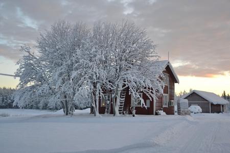 拉普兰, 瑞典, 雪, 景观, 冬天, 低温, 树