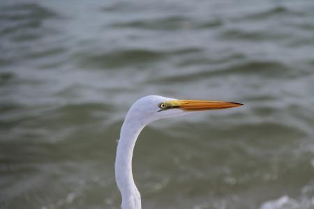 鸟, 春天, 水鸟, 彩虹, 孔雀羽毛, 自然, 天鹅