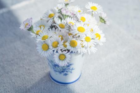 花, 黛西, 白色, 野花, 花瓶, 花束, 表