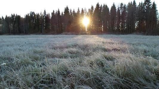 弗罗斯特, 冬天, 感冒, 赛季, 冰冷, 冻结, 森林