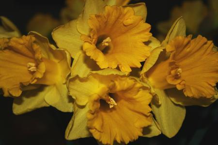 花, 复活节, 百合, 室内植物, 自然