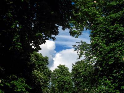 低, 角度, 摄影, 树木, 绿色, 天空, 树