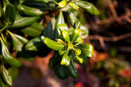 青岛, 秋天, 特写, 中国, 植物, 自然, 叶