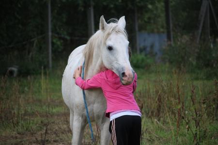 马, 女孩, 友谊, 种马, 模具, 牧场, 纯种阿拉伯