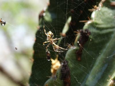 昆虫, 蜘蛛, web, 蛛形纲动物, 自然