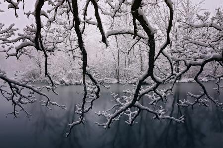 冬天, 美, 雪, 四季, 树木, 美丽, 圣诞节
