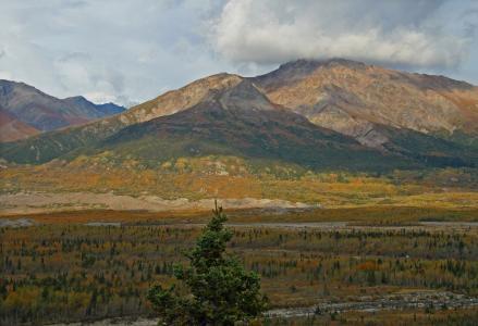 阿拉斯加, 苔原, 荒野, 山, 森林, 树木, 景观