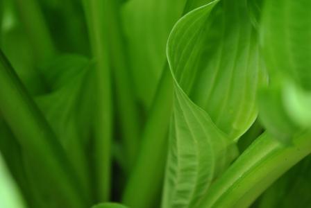 叶, 植物, 自然, 绿色, 叶子, 环境, 夏季