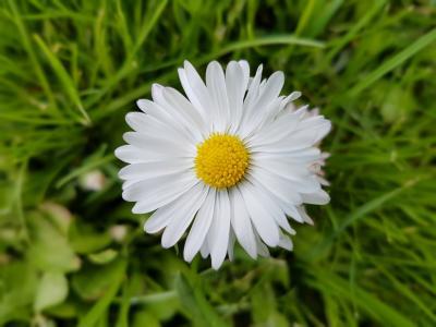 雏菊, 春天, 花, 草甸, 黛西, 自然, 花