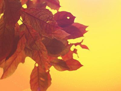 叶子, 天空, 树, 自然, 红色, 心情, 春天