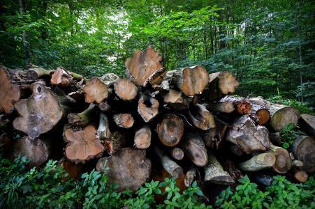 树木, 菌株, 树堆栈, 日志, 树的树皮, 森林, 像