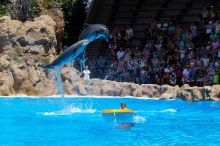海豚, 海豚表演, 示范, meeresbewohner, 动物展示