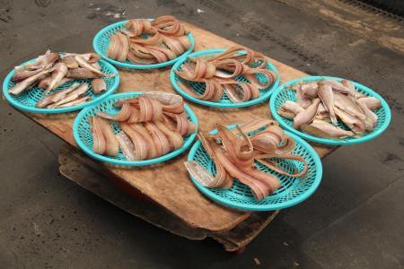 鱼, 鱼市场, 海洋动物