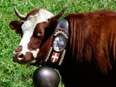 母牛, 牛, 贝尔, 阿尔卑斯山, 丰度