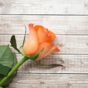 橙色, 花瓣, 玫瑰, 木制, 木材, 表, 木材-材料