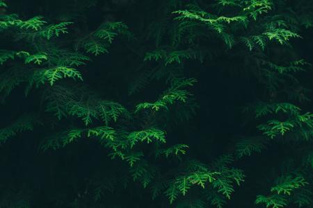 颜色, 针叶树, 环境, 植物区系, 叶子, 绿色, 叶子