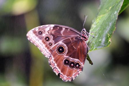 蝴蝶, 自然, 花园, 昆虫