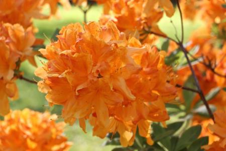 花, 自然, 颜色, 美丽, 开花, 绽放, 植物